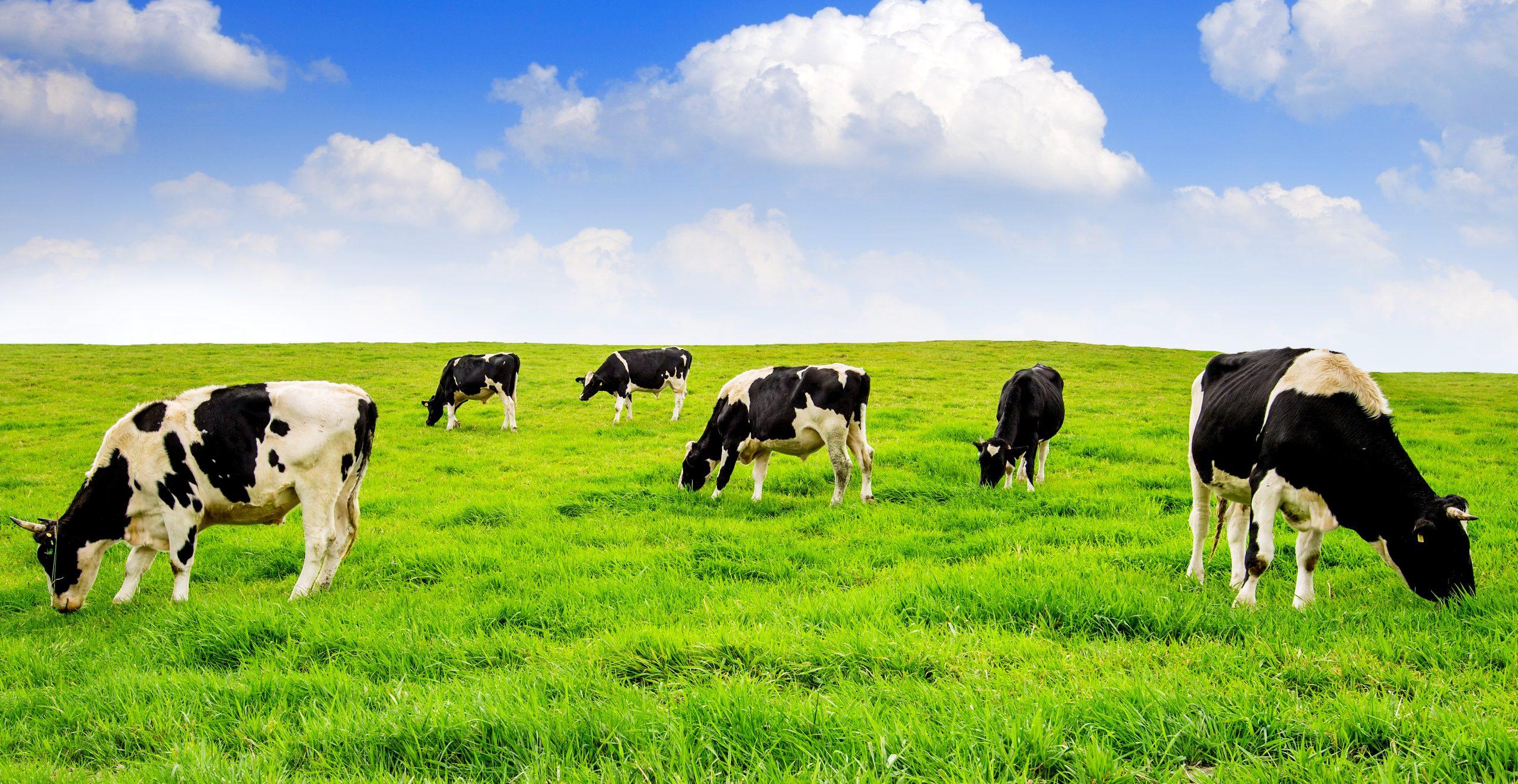 Com tecnologia e definições regulatórias, Brasil pode se destacar na produção de carnes alternativas